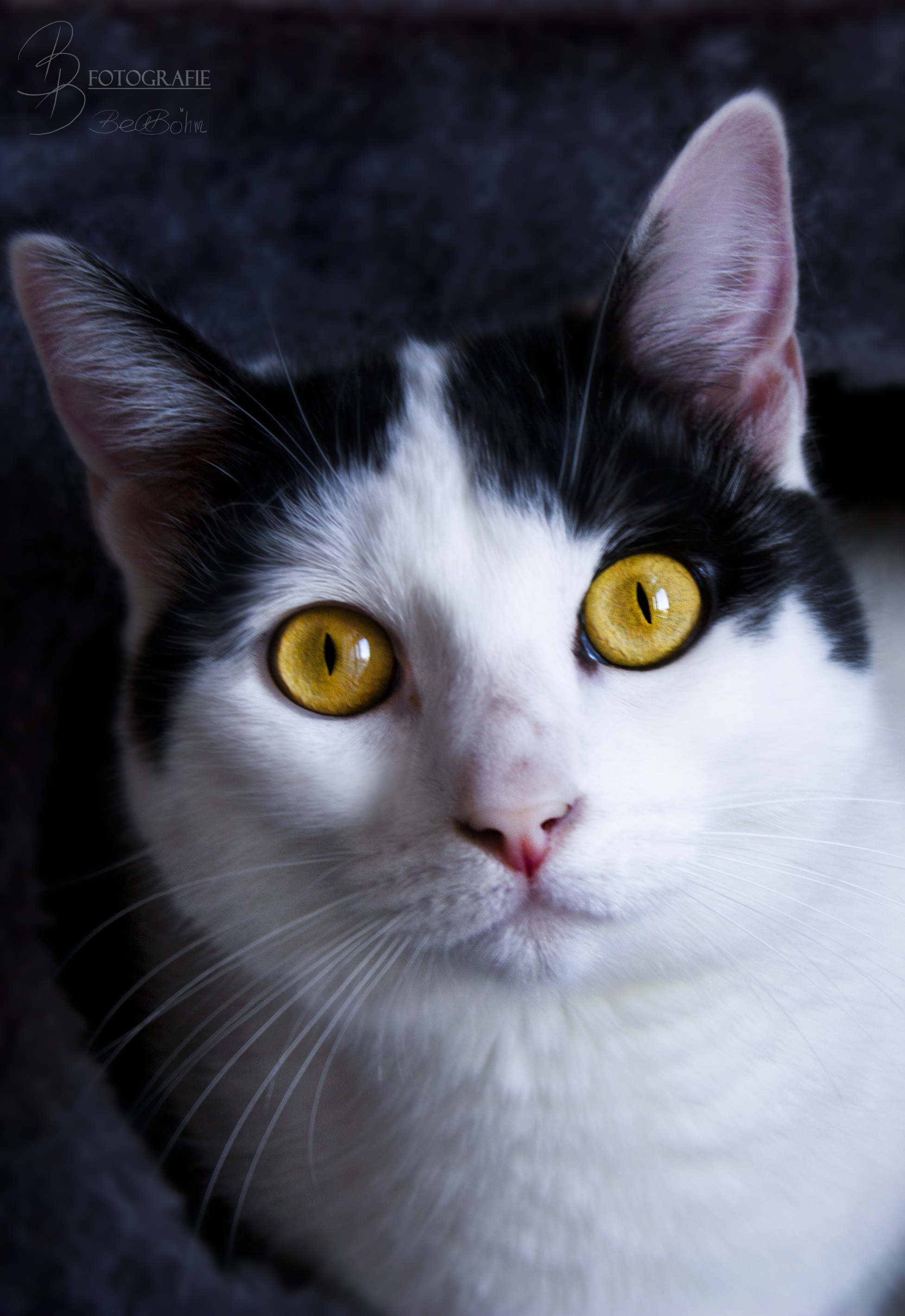 14 Erschrockener Katzenblick