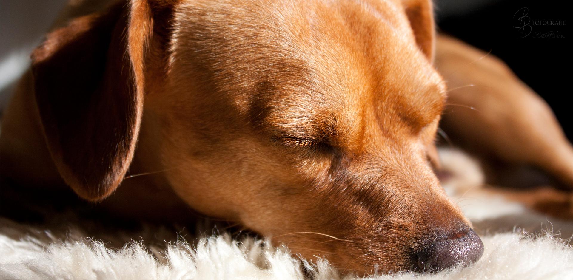 23 Der schlafende Hund
