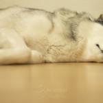Haustiershooting - Lilu schlaeft oder mein kleines Stueck vom Glueck - 2