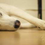 Haustiershooting - Lilu schlaeft oder mein kleines Stueck vom Glueck - 4
