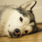 Haustiershooting - Lilu schlaeft oder mein kleines Stueck vom Glueck - 5