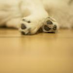 Haustiershooting - Lilu schlaeft oder mein kleines Stueck vom Glueck - 10