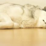 Haustiershooting - Lilu schlaeft oder mein kleines Stueck vom Glueck - 14